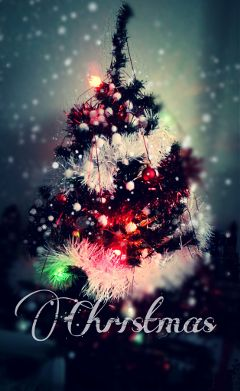 christmas tree sapin no december