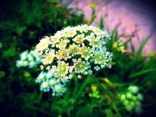 nature color splash spring summer flower
