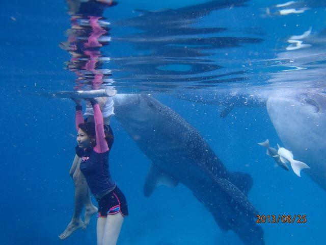 62095124132 oslob whale sharks.jpeg
