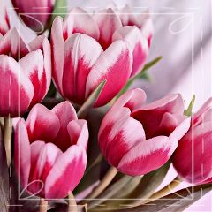 cute flower nature