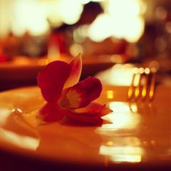 birthday cute photography flower food