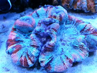 nature photography pets & animals colorful coral macro