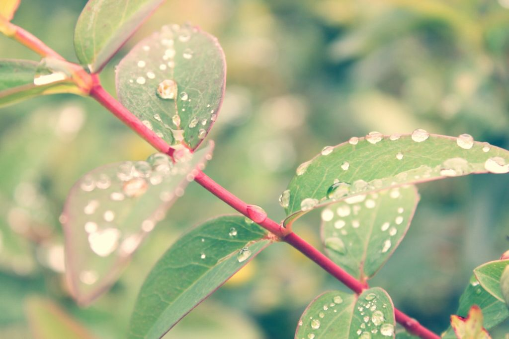 #Dew  #leaves  #nature