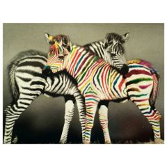 card animals zebras black & white colourful
