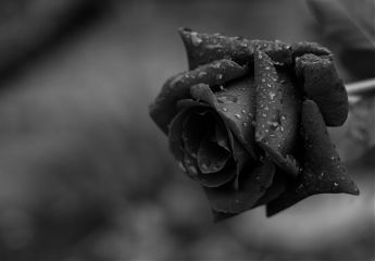 photography switzerland black & white
