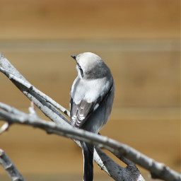 pets & animals photography zoo bird love fly