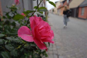 color splash flower travel vintage nature