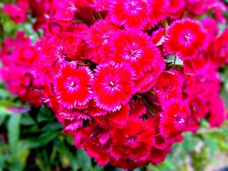 color splash nature spring vintage flower