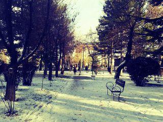 snow schoolway winter trees