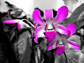 photography flower nature orchid