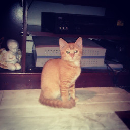 pets & animals photography