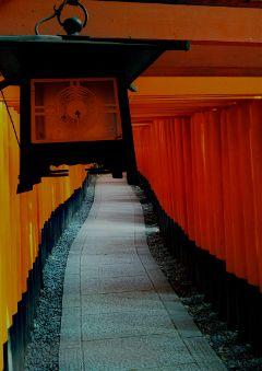 kyoto temple fushimi-inari