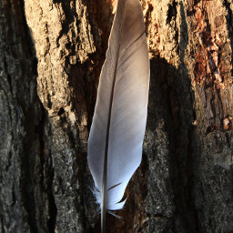 love nature photography feather travel tree