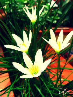 photography nature summer flower flora