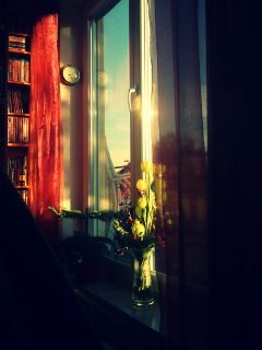 photography flower balcony