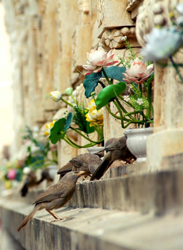3bird #travel #india