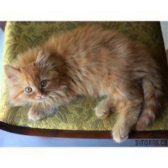 love kittens cats pets & animals cute